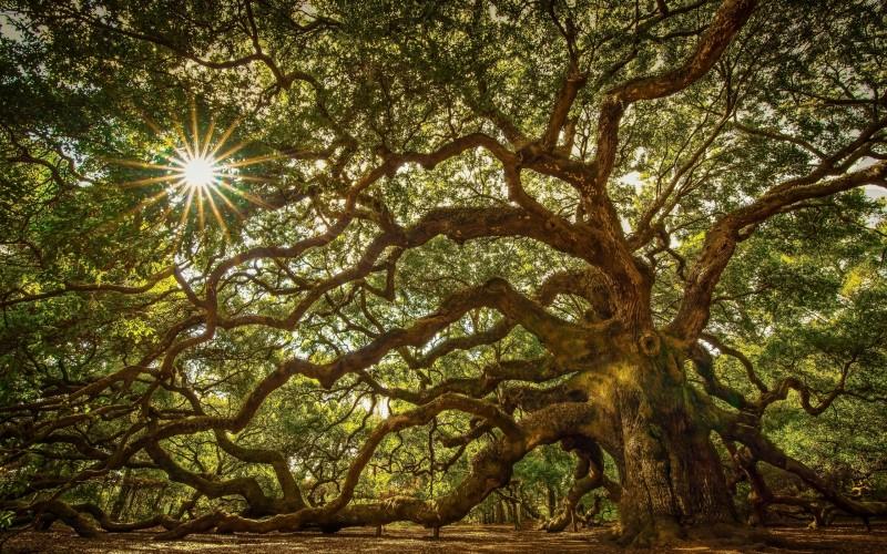 Дерево-жизни, Маслоу о познании